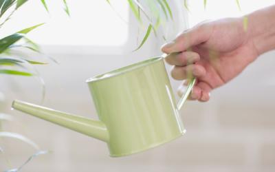 #4 Zásady správného zalévání: Jak pokojovky zalévat, aby byly spokojené?
